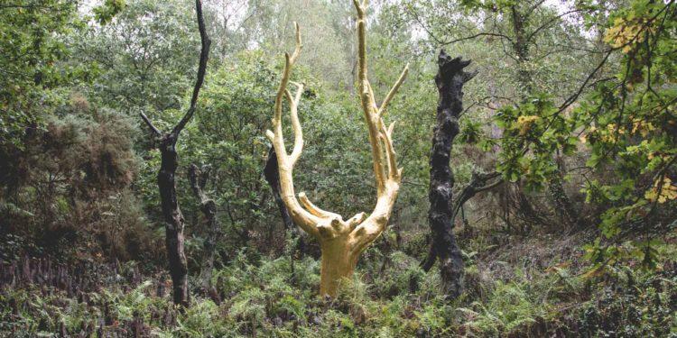 Road Trip #1 : voyage au bout de la Terre - Forêt de Paimpont, Val sans retour.