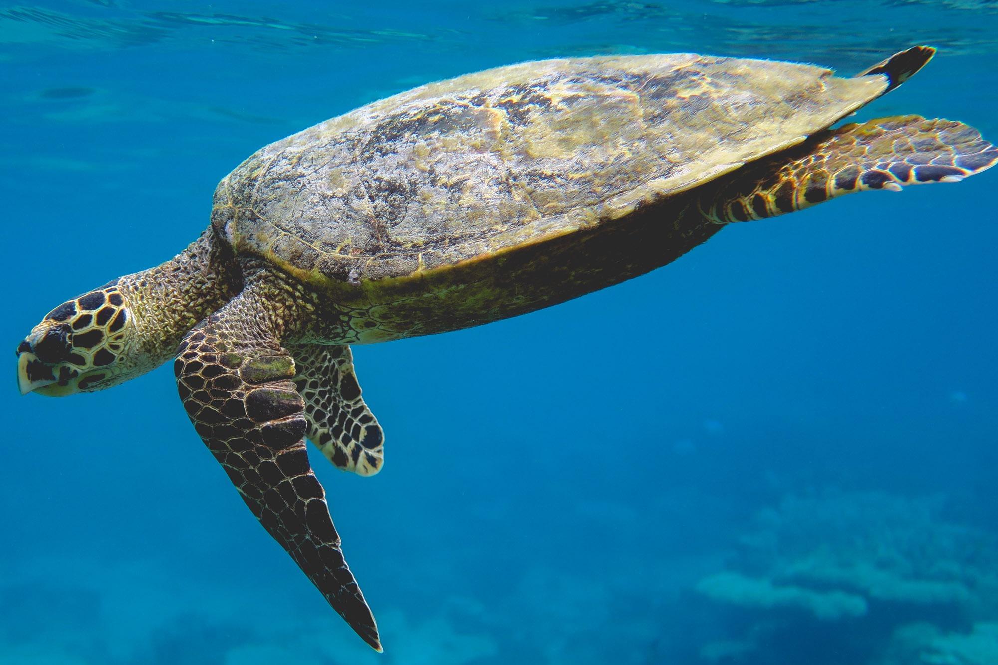 Mayotte : Escale sous-marine et Omega Seamaster 300