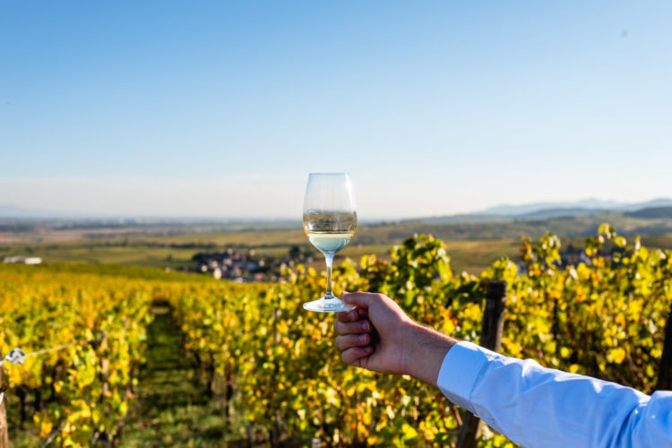 Vins d'Alsace - Trimbach